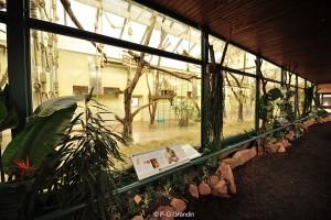 Volière des grands hapalémurs au Zoo de Cologne