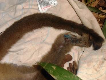 Des nouvelles du groupe II et capture de l'animal piégé