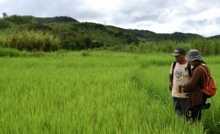 1ère récolte avec le système de riziculture intensive!