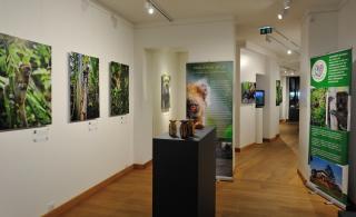 Une expo en faveur du grand hapalémur