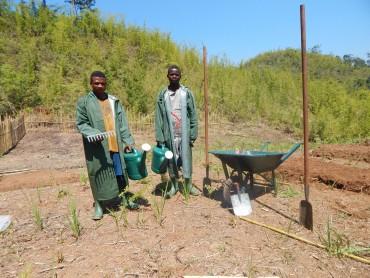 Création de 2 pépinières forestières