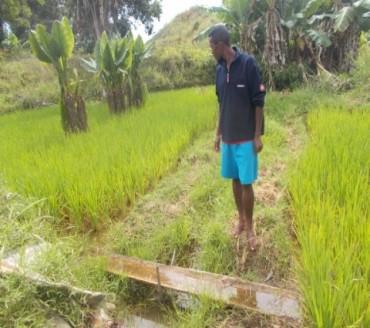 Amélioration des systèmes de production agricole