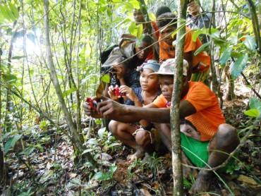 Familles, forêts et grands hapalémurs : tous unis ! – la suite 2