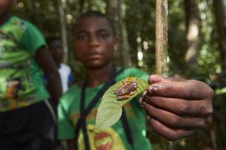 Familles, forêts et grands hapalémurs : tous unis ! – la suite 3