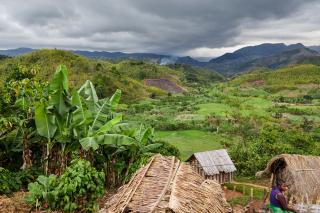Plus de 700 hectares de forêt protégés pour les grands hapalémurs !