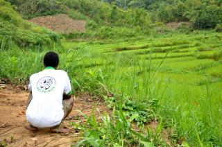 Gardiennage des rizières 2020-2021 : bilan de la campagne de contre saison