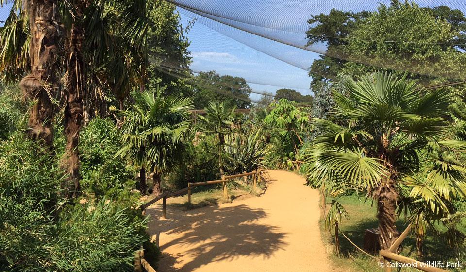 lemur-enclosure2